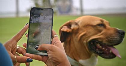 Apple te explica cómo puedes tomar mejores fotos de mascotas con el iPhone