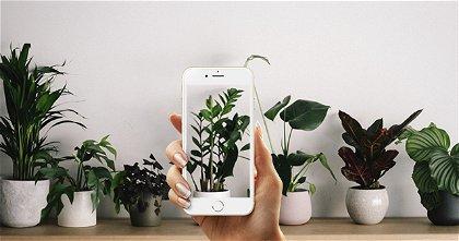Las mejores 8 aplicaciones para identificar plantas y flores en el iPhone